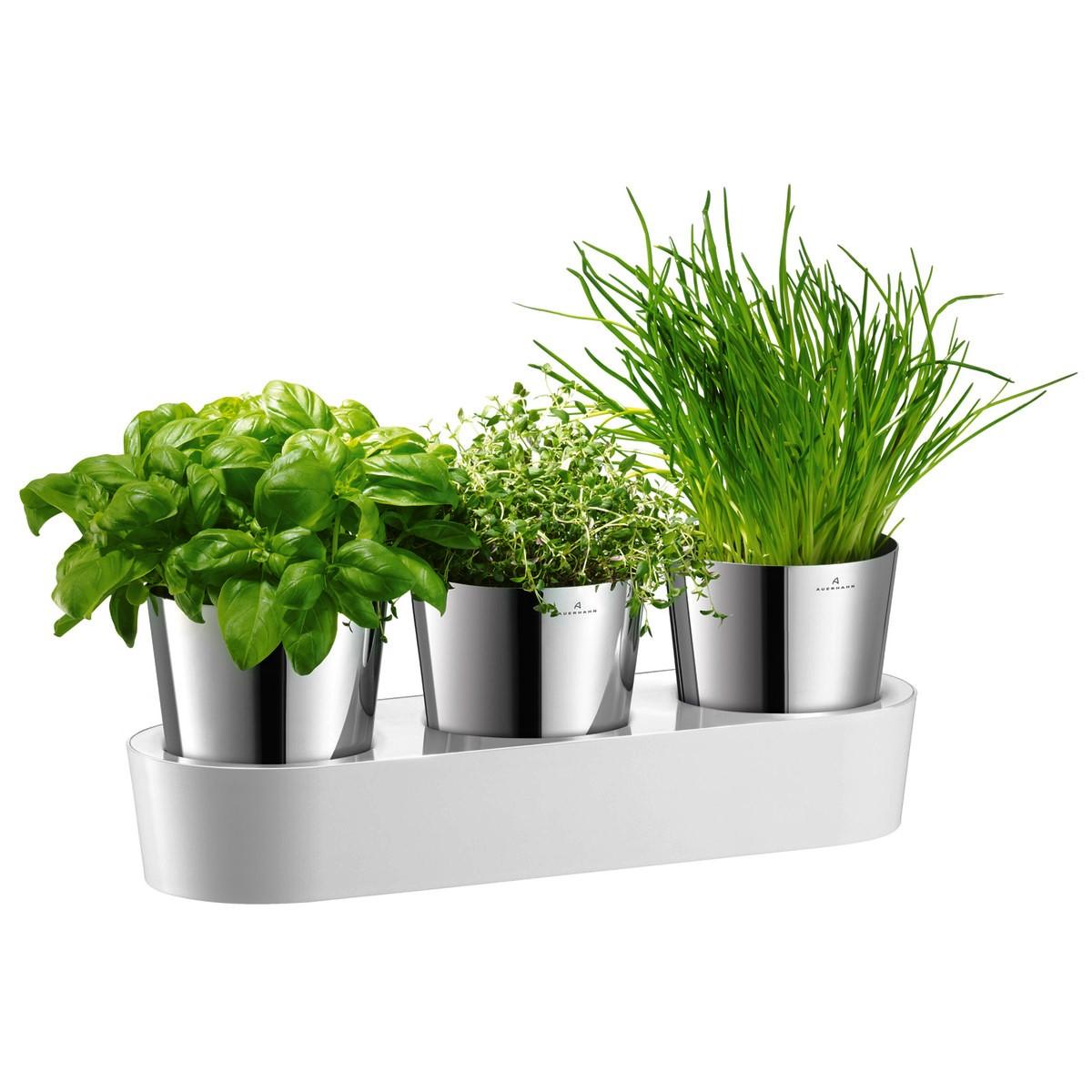 Онлайн каталог PROMENU: Набор горшочков с гидросистемой для выращивания зелени WMF Gourmet, 36х12,8 см                                   06 4130 6040